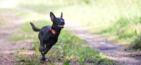 7 lekcji szczęścia i zdrowia, których możesz nauczyć się od swojego psa