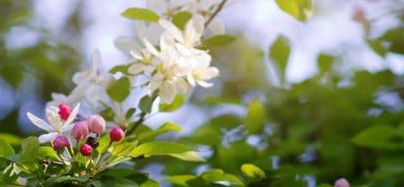 Kilka prostych metod na dodatkową dawkę pozytywnej energii na wiosnę