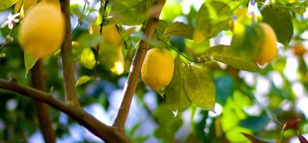 Poczucie szczęścia: 9 łatwych mini–nawyków, dzięki którym nauczysz się robić z cytryn lemoniadę