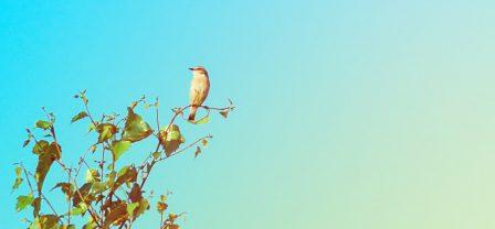 Jeśli jesteś wysoko wrażliwą osobą – te dwie rzeczy po prostu musisz wiedzieć